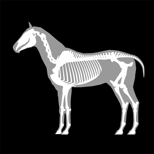 3D Horse Anatomy Software – Apps bei Google Play