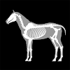 3D Horse Anatomy Software APK