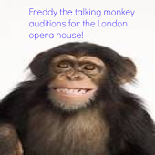 Talking monkey funny adventure