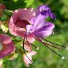 Wild parasol flower