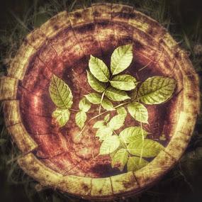 by Nat Bolfan-Stosic - Uncategorized All Uncategorized ( old, protected, walnut )