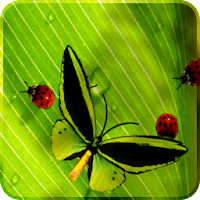 Friendly Bugs Free L.Wallpaper 2.3
