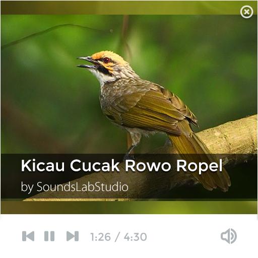 Kicau Burung Cucak Rowo Ropel