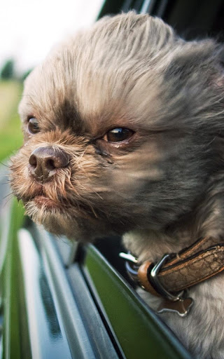 免費下載個人化APP|子犬 ライブ壁紙 app開箱文|APP開箱王