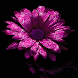 Glitter Flower Live Wallpaper