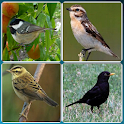 Bird Guide + Quiz Game PRO icon
