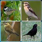 Bird Guide + Quiz Game PRO icon