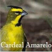 Cantos Pássaros Silvestres PRÓ