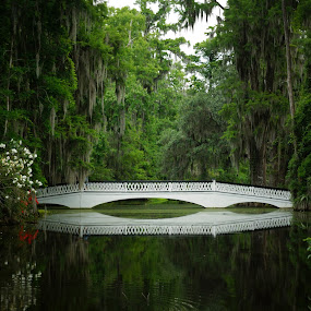 White Bridge Reflection by Susan Fries - Buildings & Architecture Bridges & Suspended Structures ( reflection, magnolia plantation, white, bridge, spanish moss, , relax, tranquil, relaxing, tranquility )