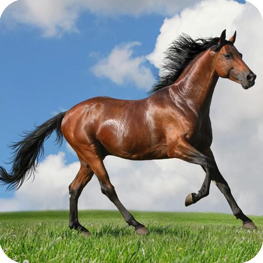 Cute Horse wallpaper LOGO-APP點子