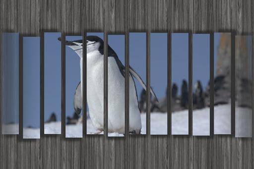 【免費工具App】數位相框/數碼相架/數碼相框-FotoDream Lite-APP點子