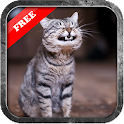 Funny Cute Cat Wallpaper icon
