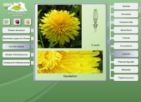 Screenshot of Biology - Plant Morphology