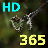 bible 365 (français) HD