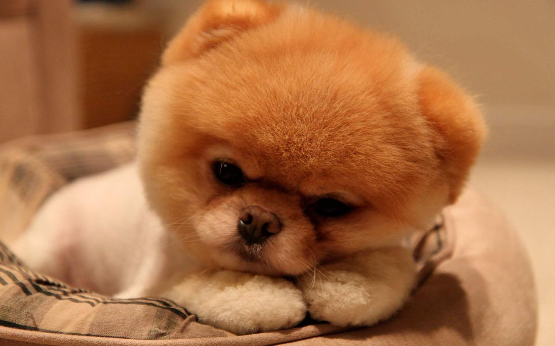 download wallpaper dog little - photo #37