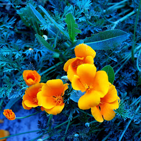 Flor amarilla by Daniel Sapag - Flowers Flowers in the Wild ( amarilla, flores, primavera, silvestre, naturaleza )