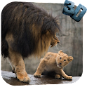 Lion Video Live Wallpaper icon