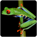 Frog Sounds icon