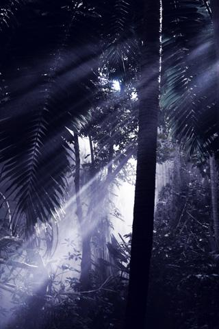 Lightning Bug - Jungle Pack- screenshot