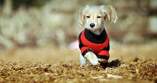 犬服のパズル