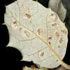 Agalla de encina, Holm oak gall