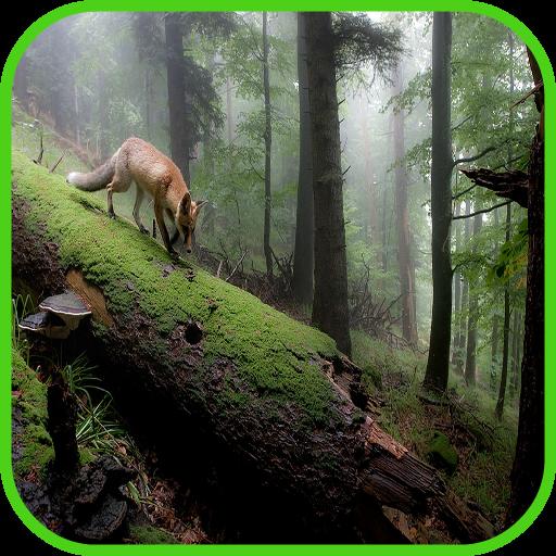 福克斯壁纸 個人化 App LOGO-APP試玩