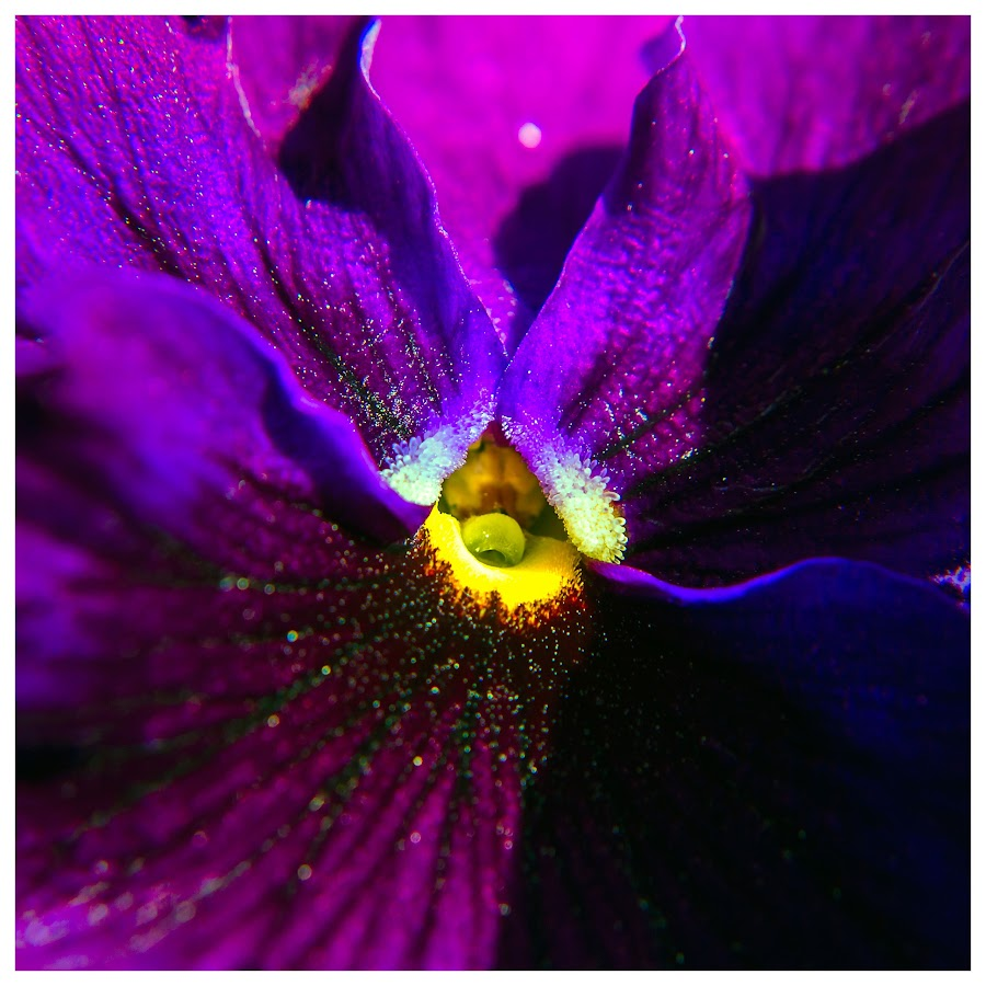 by Tracey Everts - Flowers Single Flower