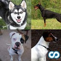 Dog Breeds icon