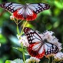 Butterfly Live Wallpaper logo