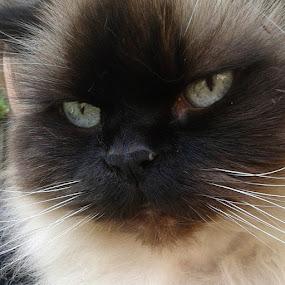 Love this cat xox by Ashleigh Jane Schofield - Animals - Cats Kittens