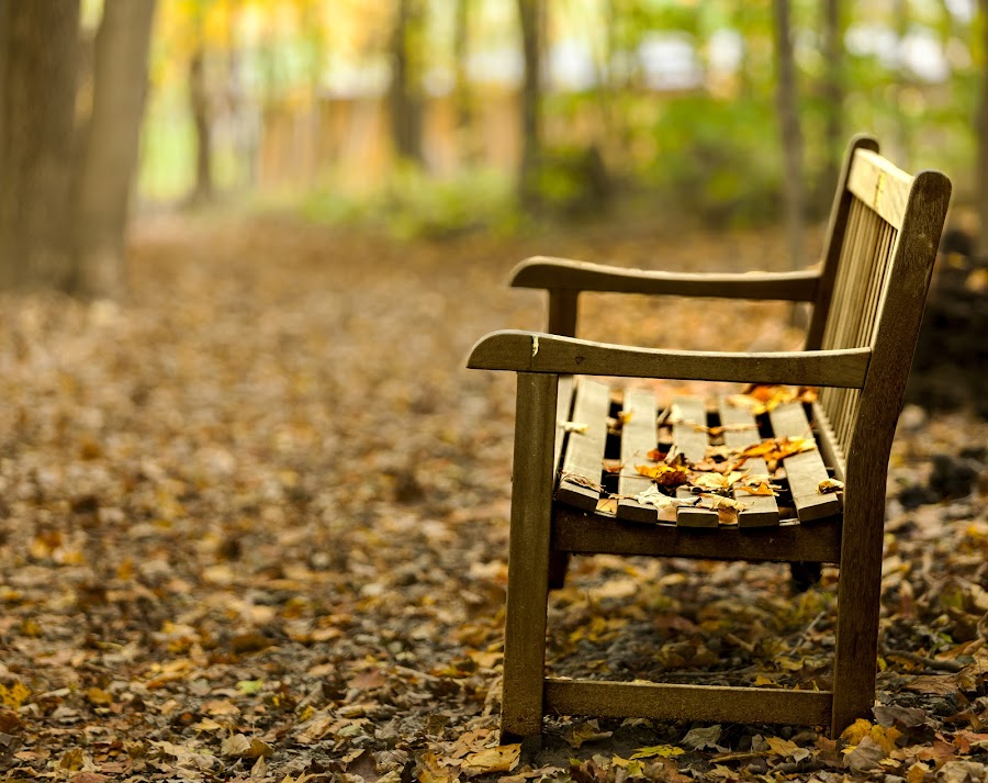 Stories waiting to be told by Joshua Bidwell - City,  Street & Park  City Parks ( public park, bench, autumn, parks, fall, fine art, cincinnati, photography, public bench, public, furniture, object )