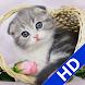 Find Diff-Cute Cat Album