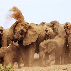 Elephant Herd by Arun Prasanna - Animals Other ( #elephant #heard #spray #mud )