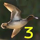 Birdhunt3 icon