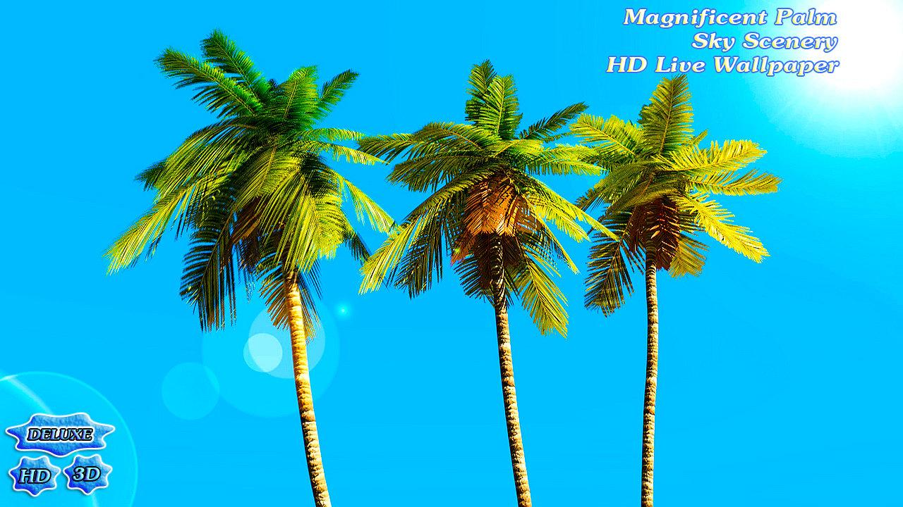 Magnificent Palm Sky Scenery- screenshot