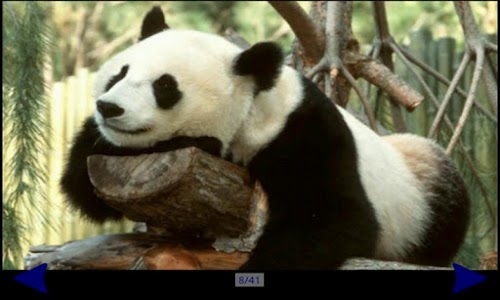 Panda Gallery HD screenshot 2