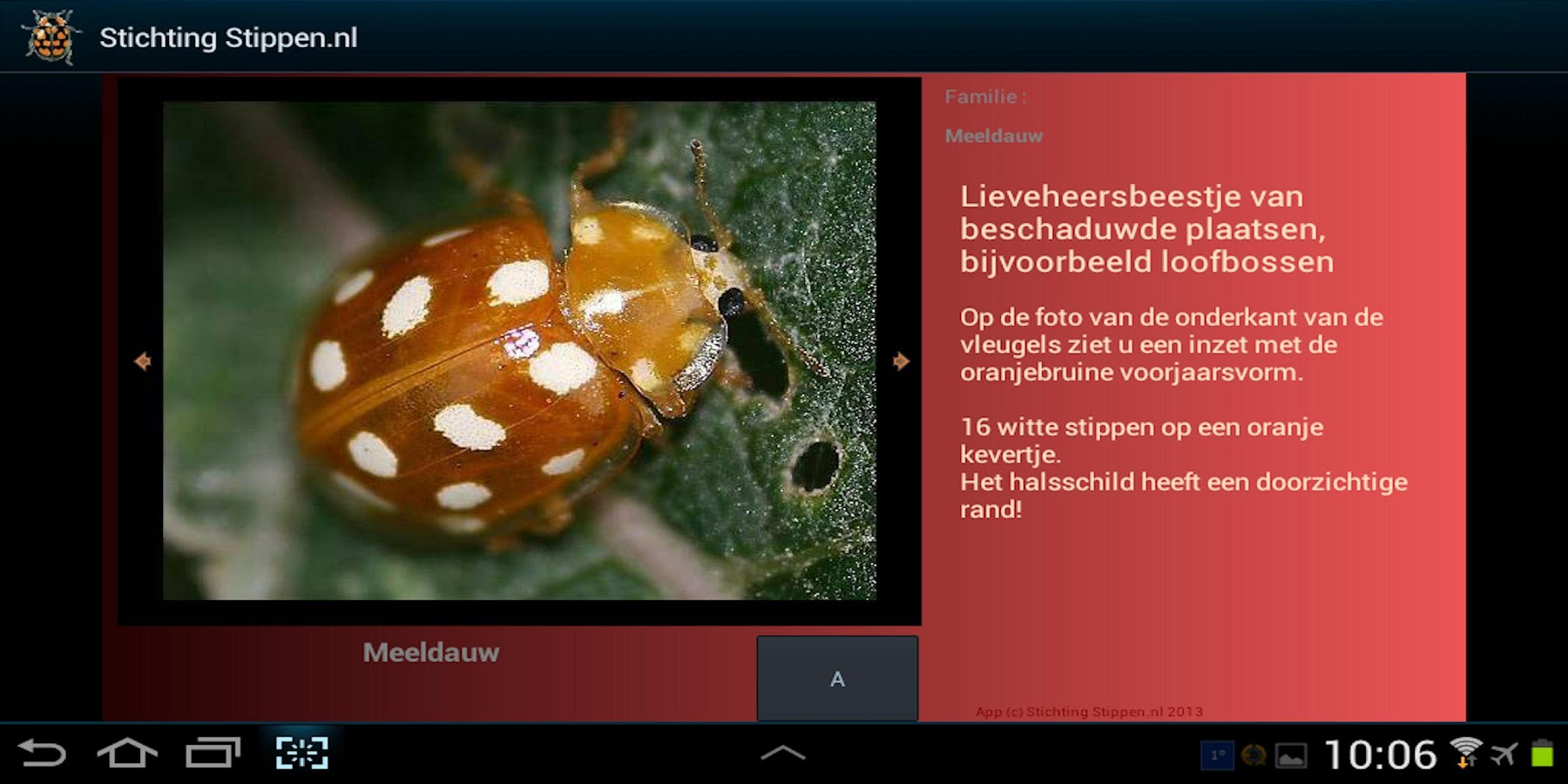 Lieveheersbeestjes in NL en BE - screenshot