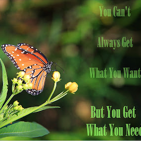 God Provides Your Needs by Deb Bulger - Typography Quotes & Sentences ( quotes, nature, butterflies, music quotes, typography,  )