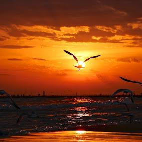 Sun Soar by Jeremy Church - Landscapes Beaches ( water, michigan, seagull, lake michigan, sunset, lighthouse, beach )
