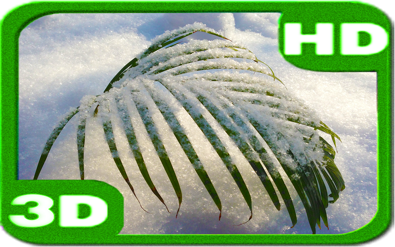 Tender Snowy Palm- screenshot