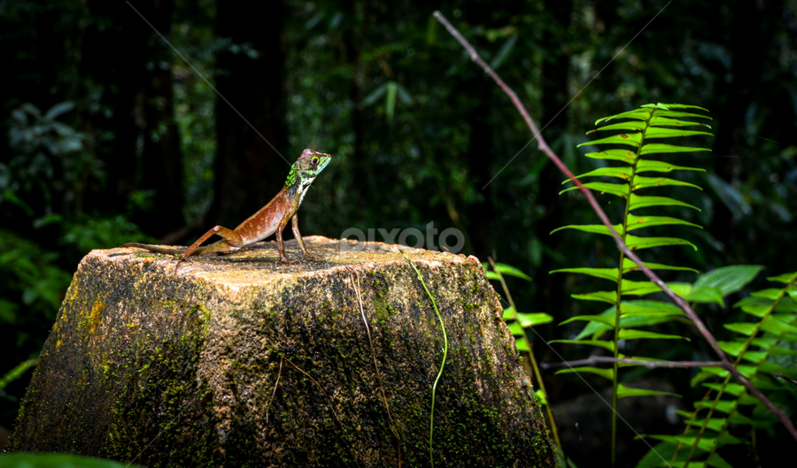 by John Anthony - Animals Reptiles
