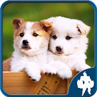 Jigsaw Puzzle Dogs icon