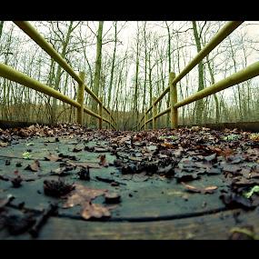 The bridge by Livio Siano - Nature Up Close Leaves & Grasses ( winter, cold, nature, leaf, bridge )