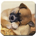 Puppy - HD Wallpapers icon