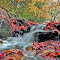 Red and Yellow Leaves.JPG