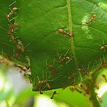 Ants of Maharashtra & Madhya Pradesh