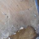 Spider Webbing Over Door