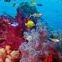 Ocean Live Wallpaper.apk icon