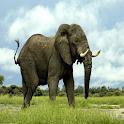 اروع مشاهد الفيلة logo