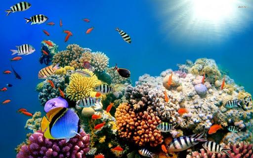 Underwater World Wallpaper